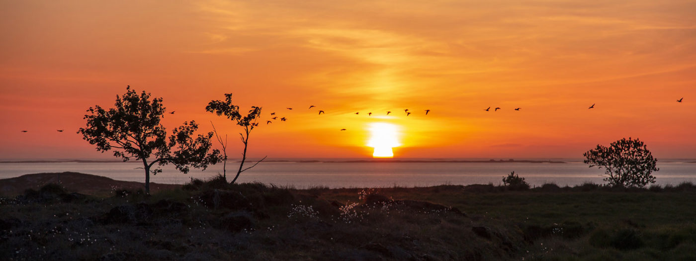 Solnedgang med fugler som flyr over horisonten